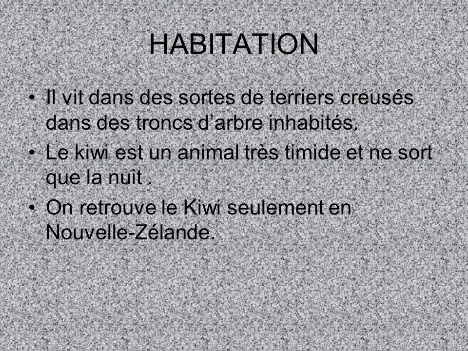 HABITATION Il vit dans des sortes de terriers creusés dans des troncs d'arbre inhabités. Le kiwi est un animal très timide et ne sort que la nuit .