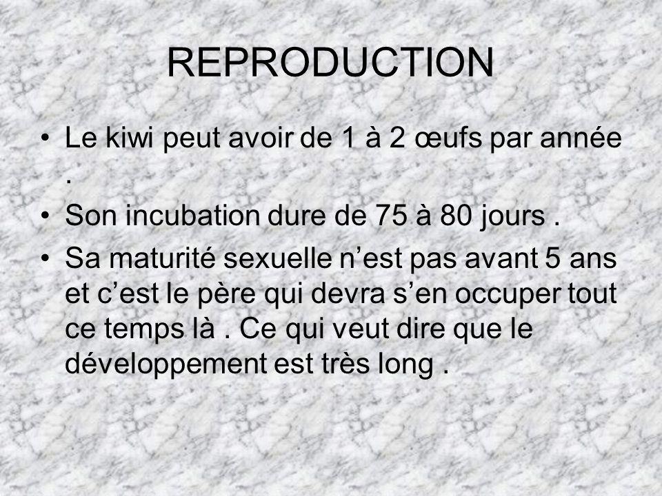 REPRODUCTION Le kiwi peut avoir de 1 à 2 œufs par année .