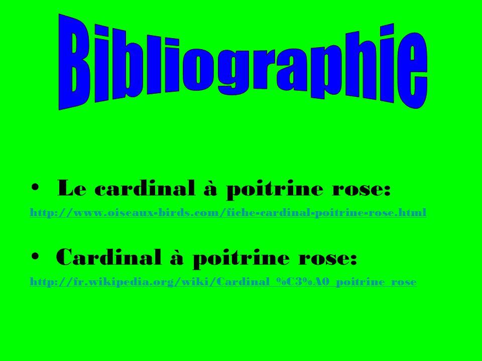  Le cardinal à poitrine rose: Cardinal à poitrine rose: