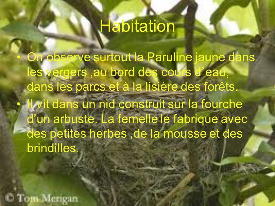 Habitation On observe surtout la Paruline jaune dans les vergers ,au bord des cours d`eau, dans les parcs et à la lisière des forêts.
