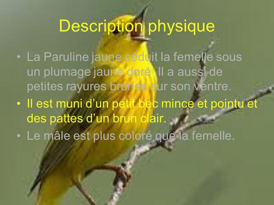 Description physique La Paruline jaune séduit la femelle sous un plumage jaune doré .Il a aussi de petites rayures brunes sur son ventre.