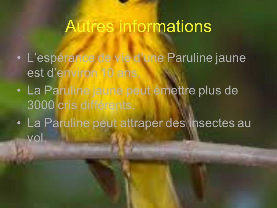 Autres informations L'espérance de vie d'une Paruline jaune est d'environ 10 ans. La Paruline jaune peut émettre plus de 3000 cris différents.