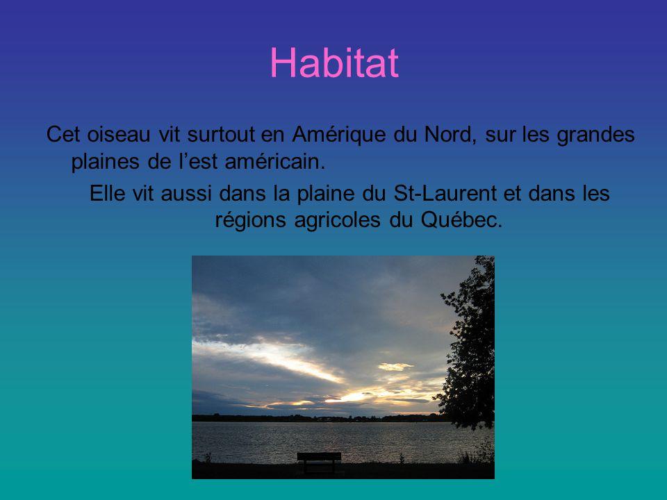 Habitat Cet oiseau vit surtout en Amérique du Nord, sur les grandes plaines de l'est américain.