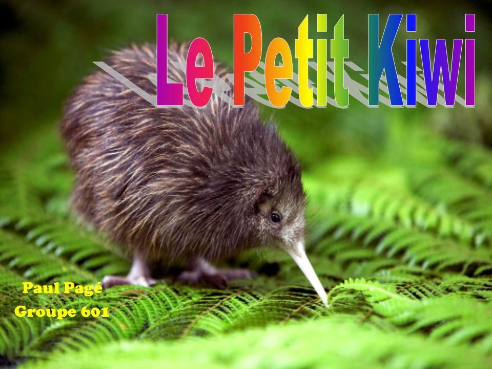 Le Petit Kiwi Paul Pagé Groupe 601