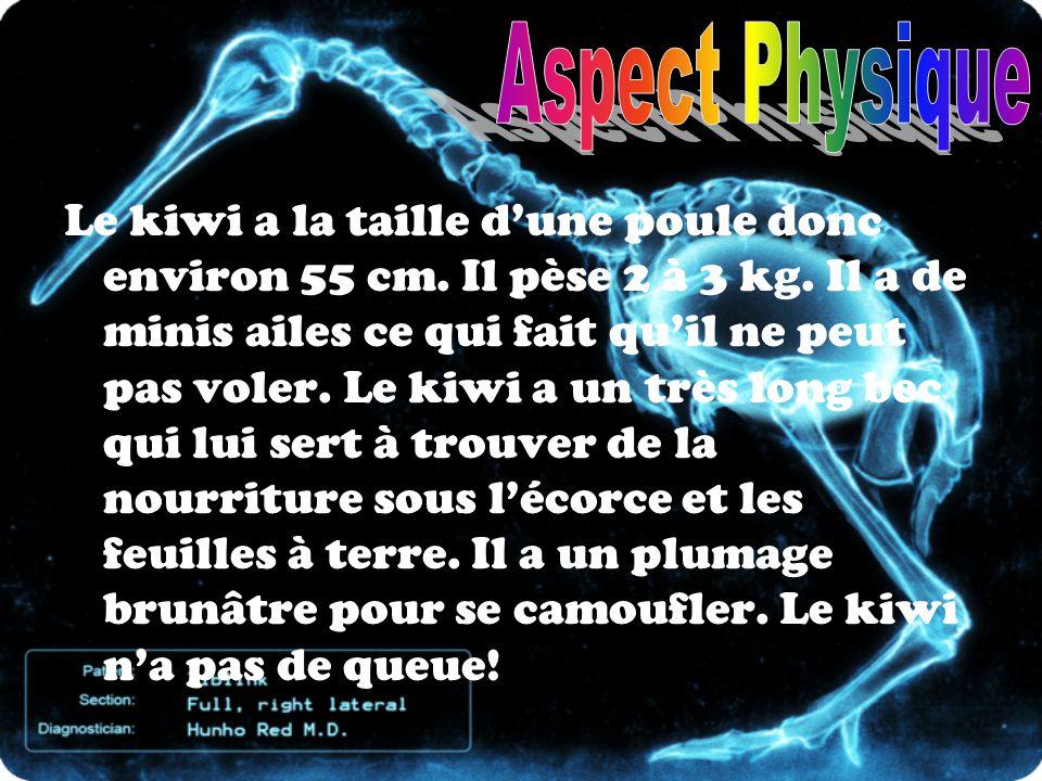 Aspect Physique