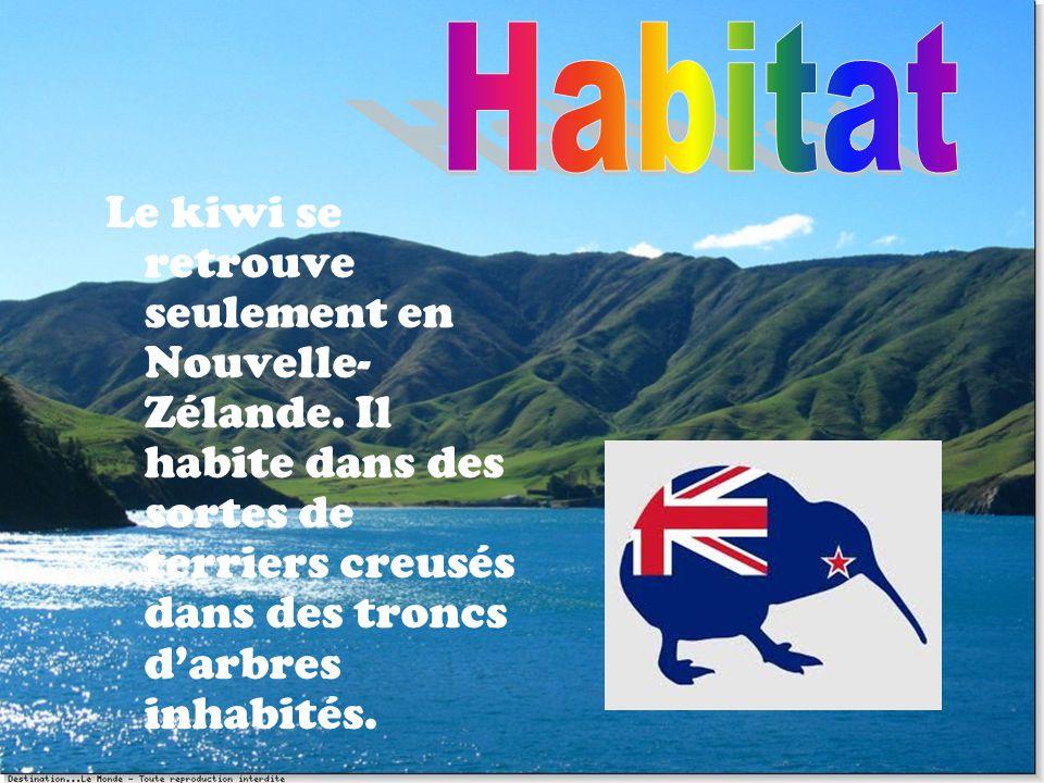 Habitat Le kiwi se retrouve seulement en Nouvelle-Zélande.