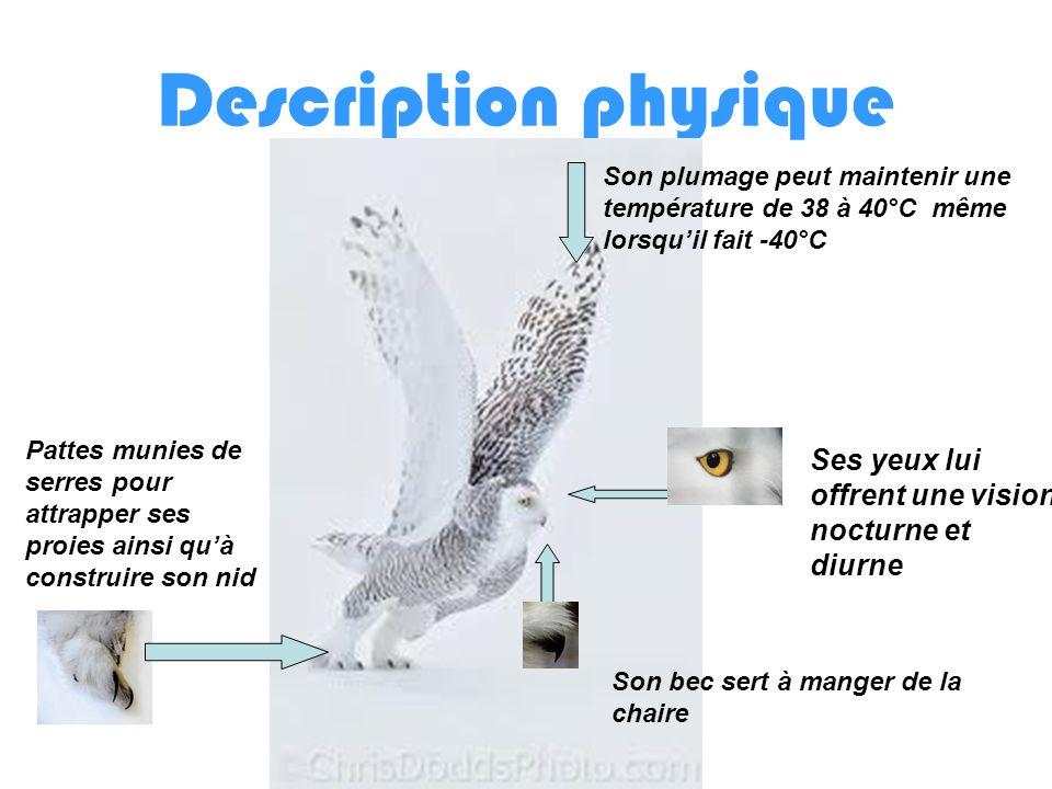 Description physique Son plumage peut maintenir une température de 38 à 40°C même lorsqu'il fait -40°C.