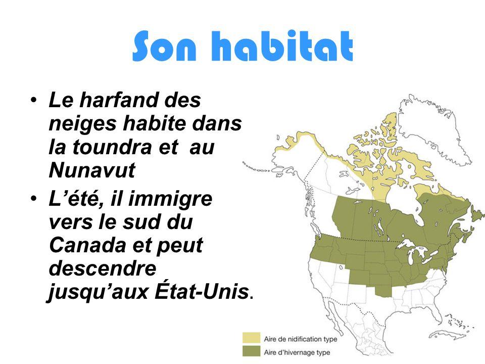 Son habitat Le harfand des neiges habite dans la toundra et au Nunavut