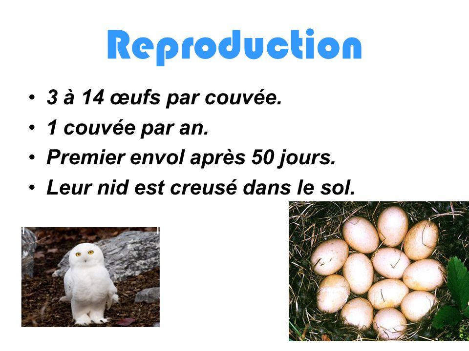 Reproduction 3 à 14 œufs par couvée. 1 couvée par an.