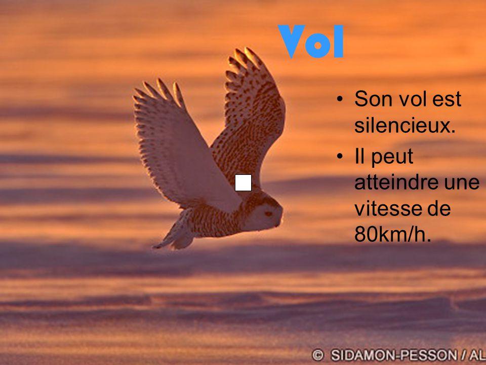 Vol Son vol est silencieux. Il peut atteindre une vitesse de 80km/h.