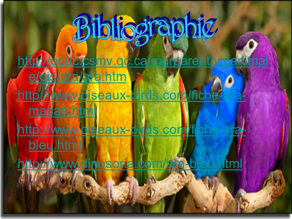 Bibliographie http://educ.csmv.qc.ca/mgrparent/vieanimale/ois/ara/ara.htm. http://www.oiseaux-birds.com/fiche-ara-macao.html.