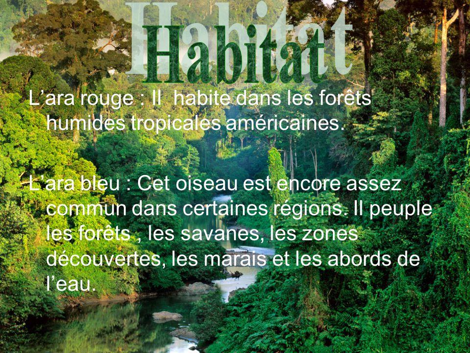Habitat L'ara rouge : Il habite dans les forêts humides tropicales américaines.