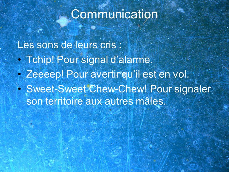 Communication Les sons de leurs cris : Tchip! Pour signal d'alarme.