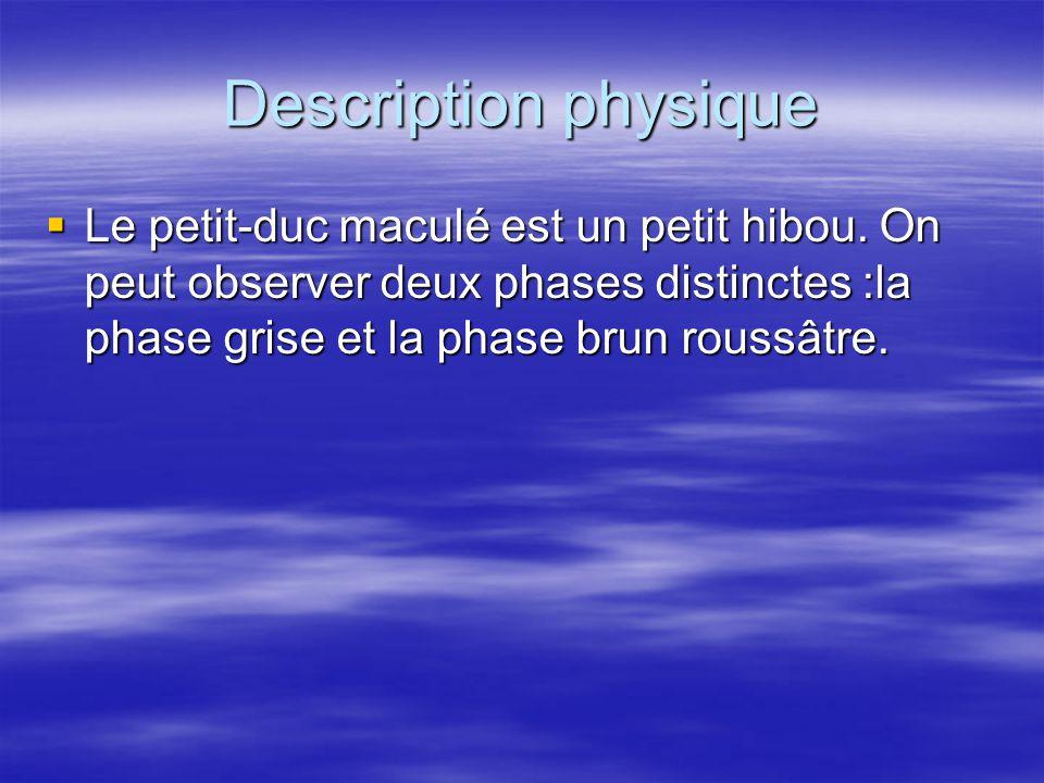 Description physique Le petit-duc maculé est un petit hibou.