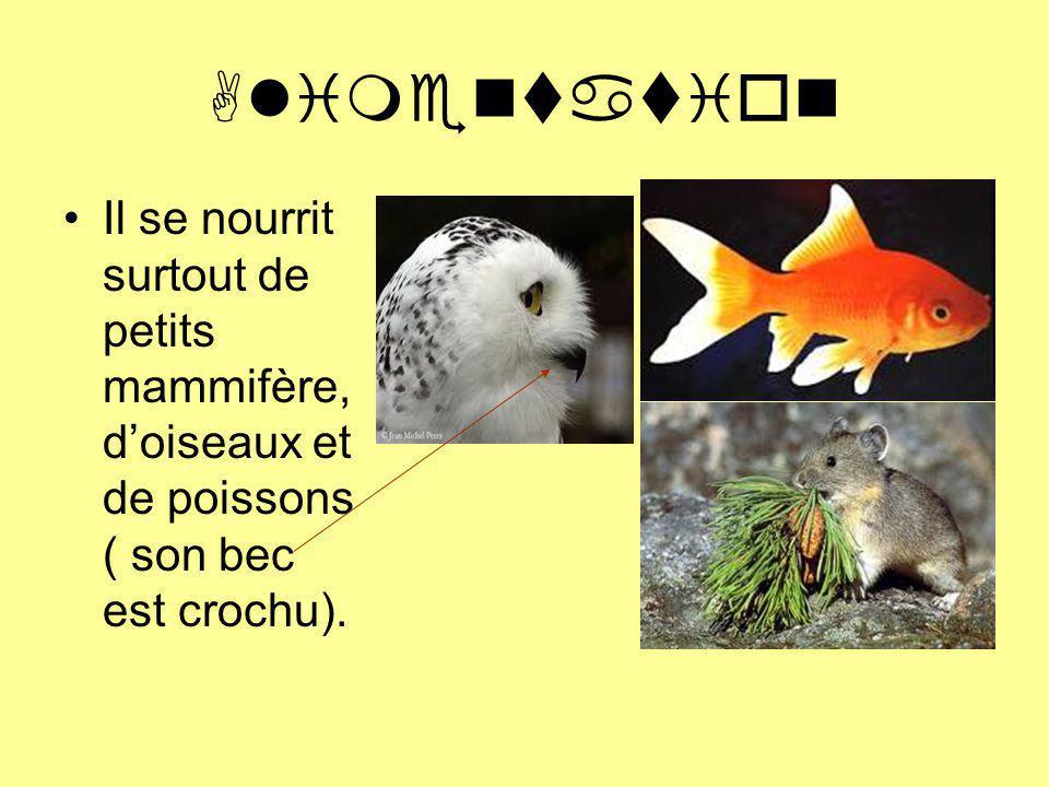 Alimentation Il se nourrit surtout de petits mammifère, d'oiseaux et de poissons ( son bec est crochu).