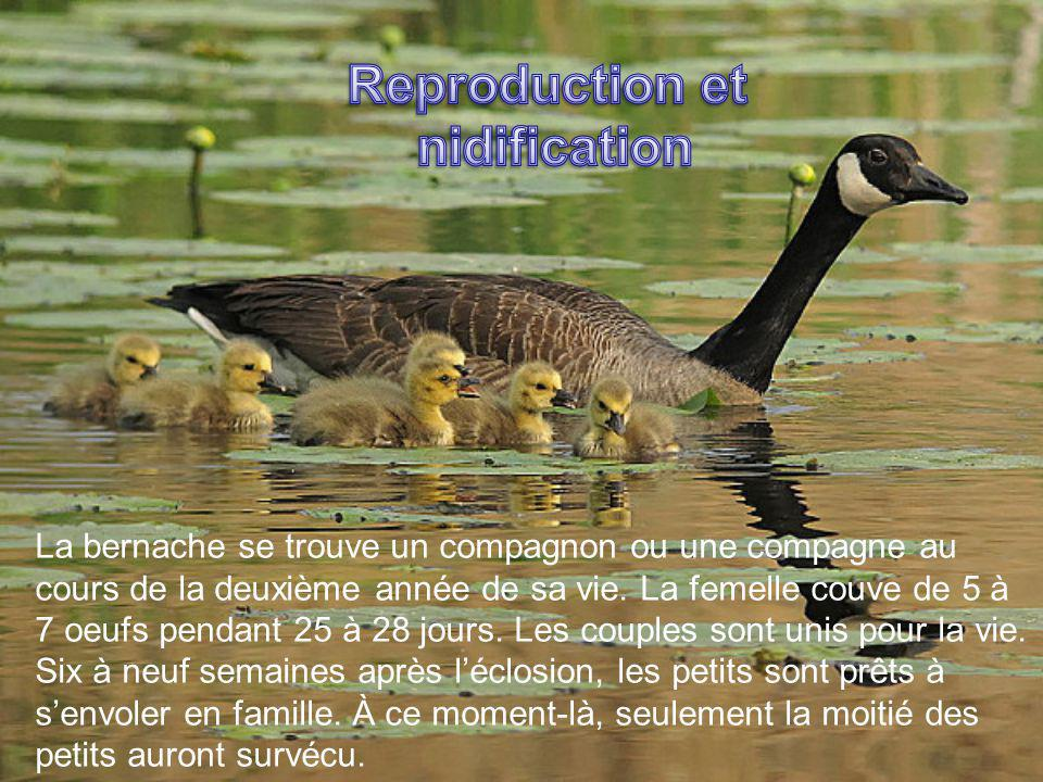 Reproduction et nidification