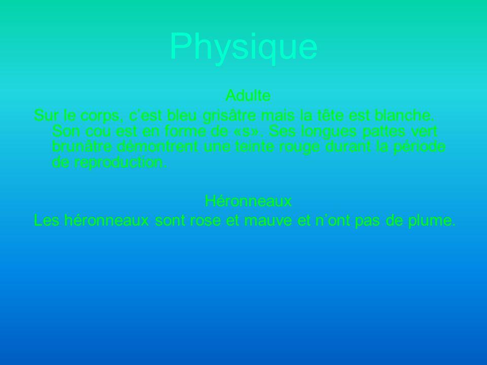 Physique Adulte.