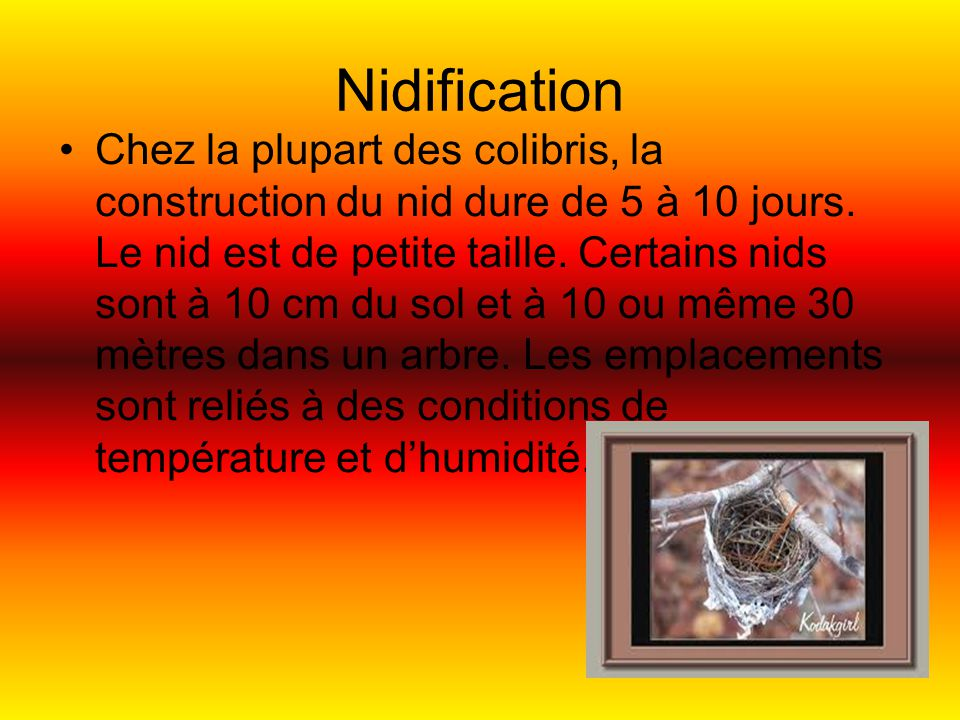 Nidification