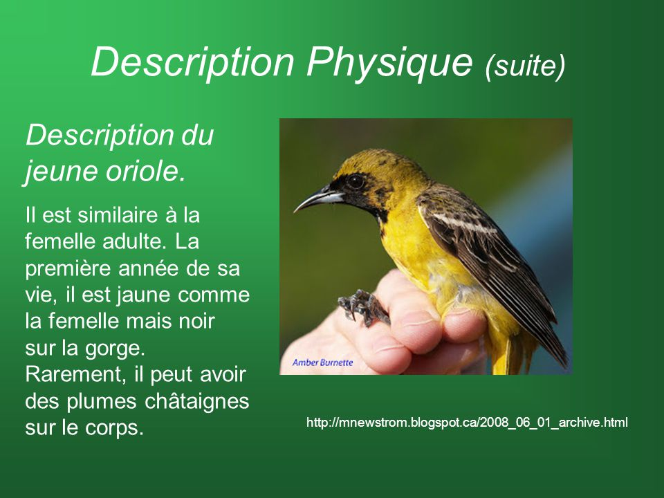 Description Physique (suite)
