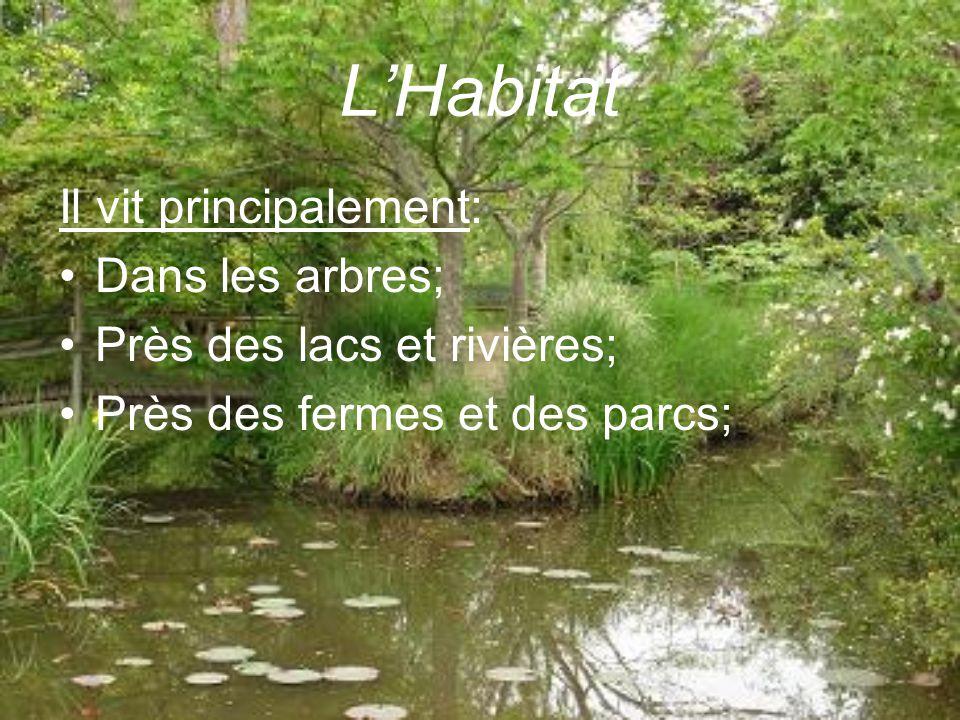 L'Habitat Il vit principalement: Dans les arbres;