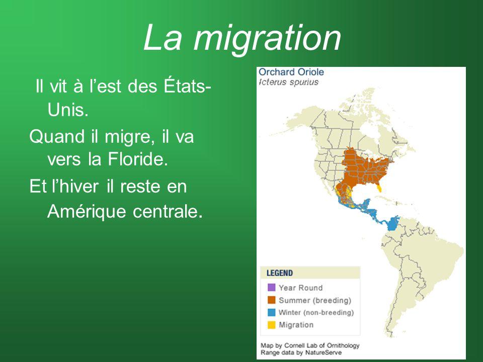 La migration Il vit à l'est des États-Unis.