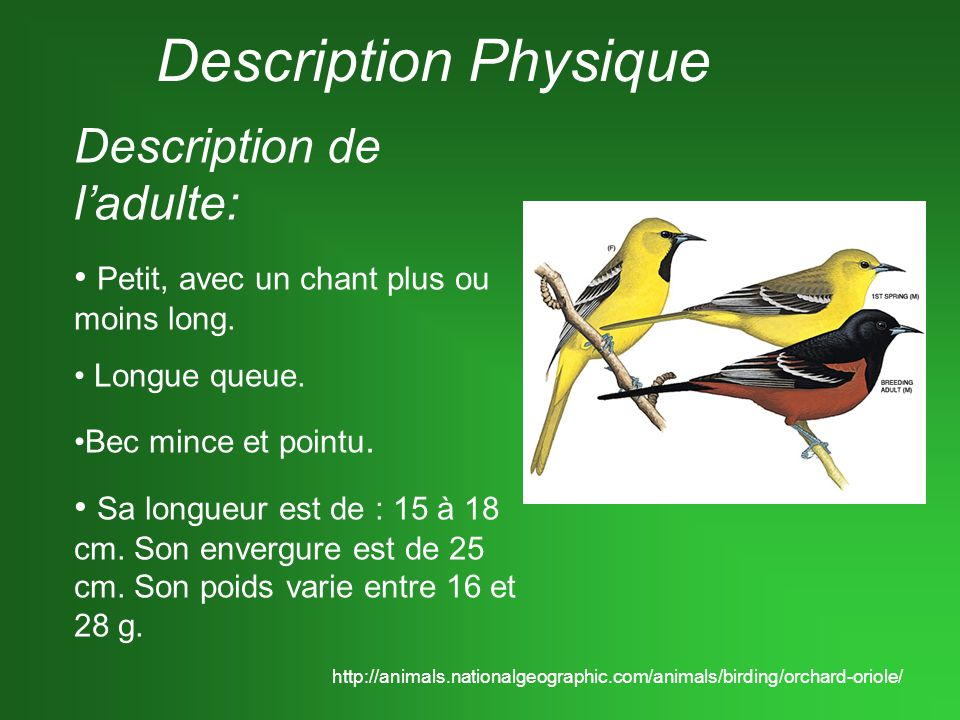 Description Physique Description de l'adulte: