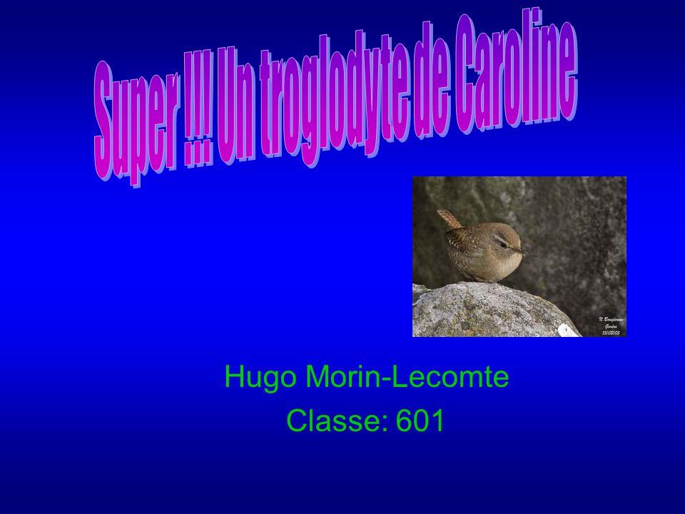 Hugo Morin-Lecomte Classe: 601