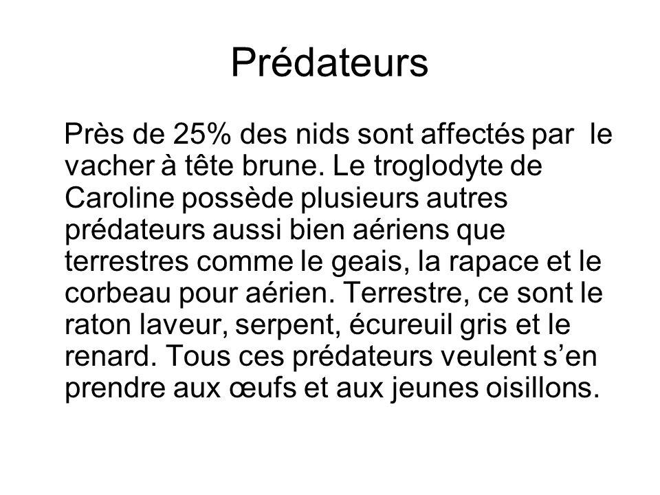 Prédateurs