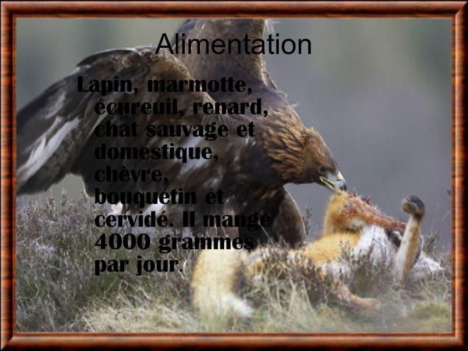 Alimentation Lapin, marmotte, écureuil, renard, chat sauvage et domestique, chèvre, bouquetin et cervidé.