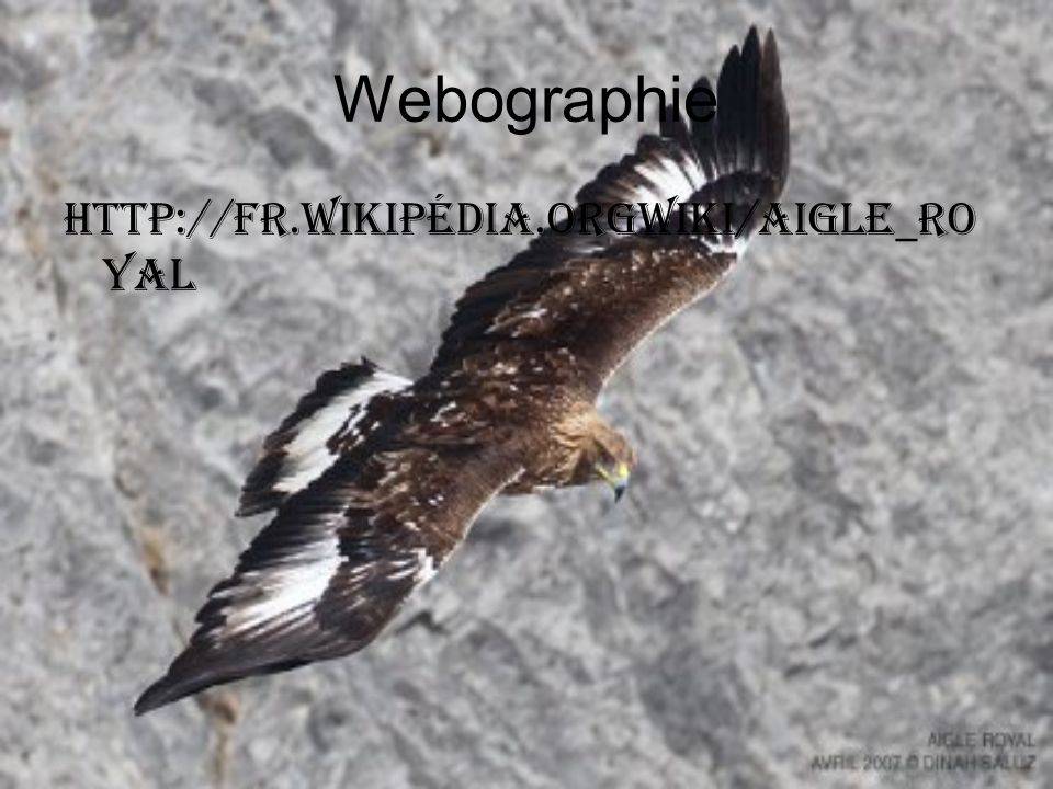 Webographie http://fr.wikipédia.orgwiki/aigle_royal