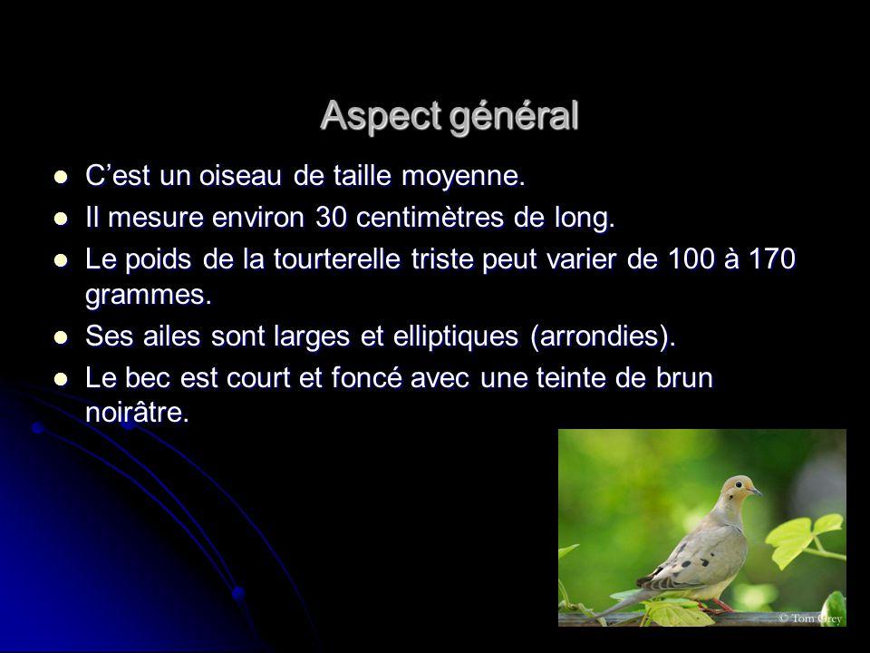 Aspect général C'est un oiseau de taille moyenne.