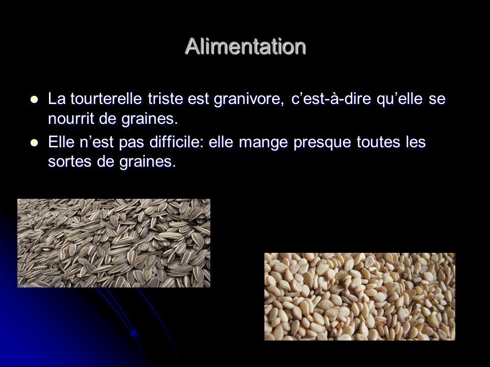 Alimentation La tourterelle triste est granivore, c'est-à-dire qu'elle se nourrit de graines.