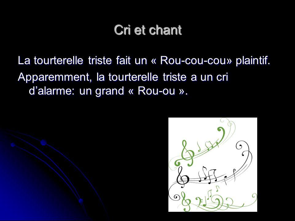 Cri et chant La tourterelle triste fait un « Rou-cou-cou» plaintif.