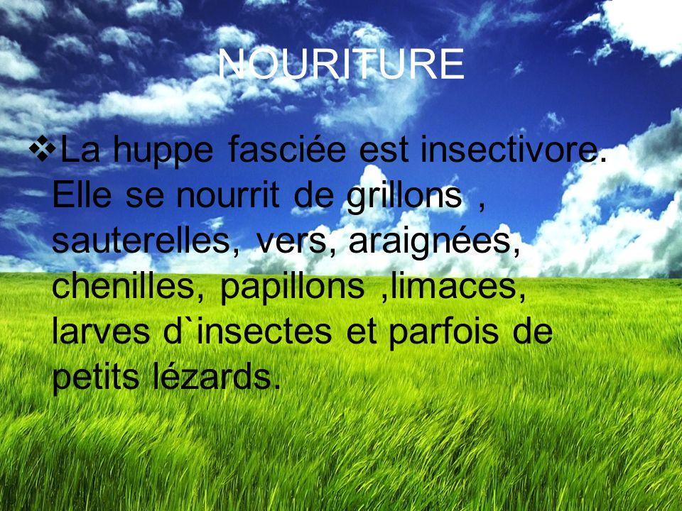 NOURITURE
