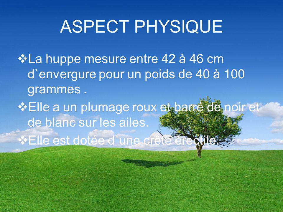 ASPECT PHYSIQUE La huppe mesure entre 42 à 46 cm d`envergure pour un poids de 40 à 100 grammes .