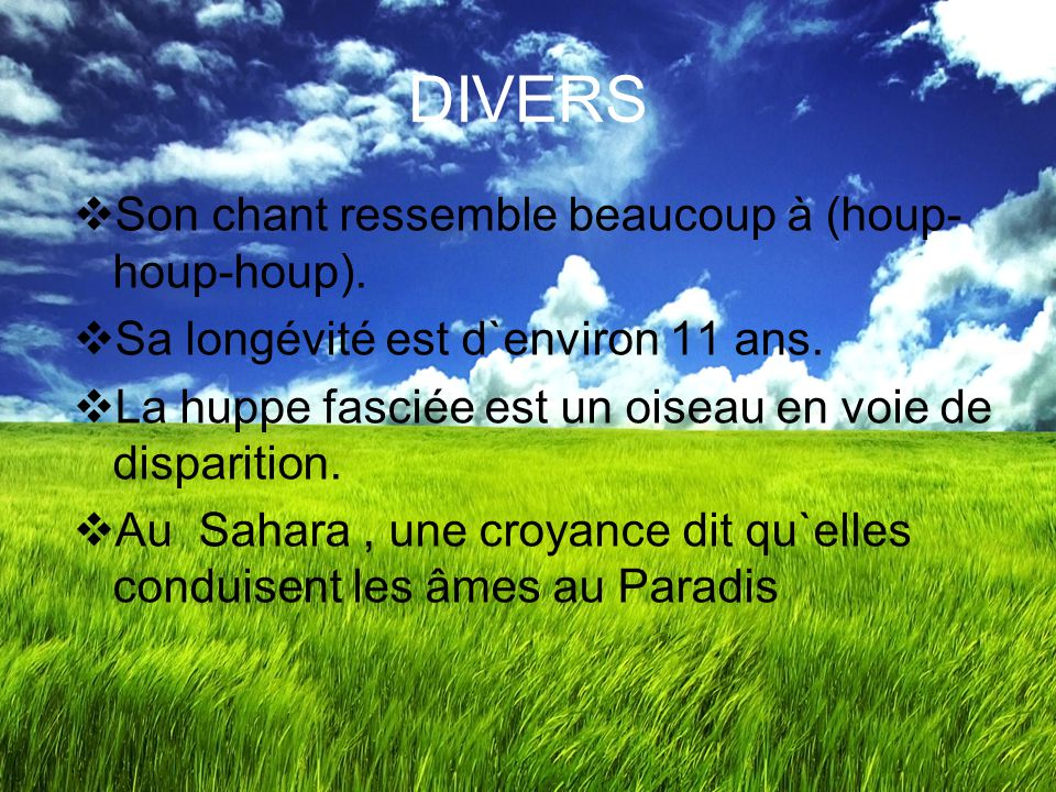 DIVERS Son chant ressemble beaucoup à (houp-houp-houp).