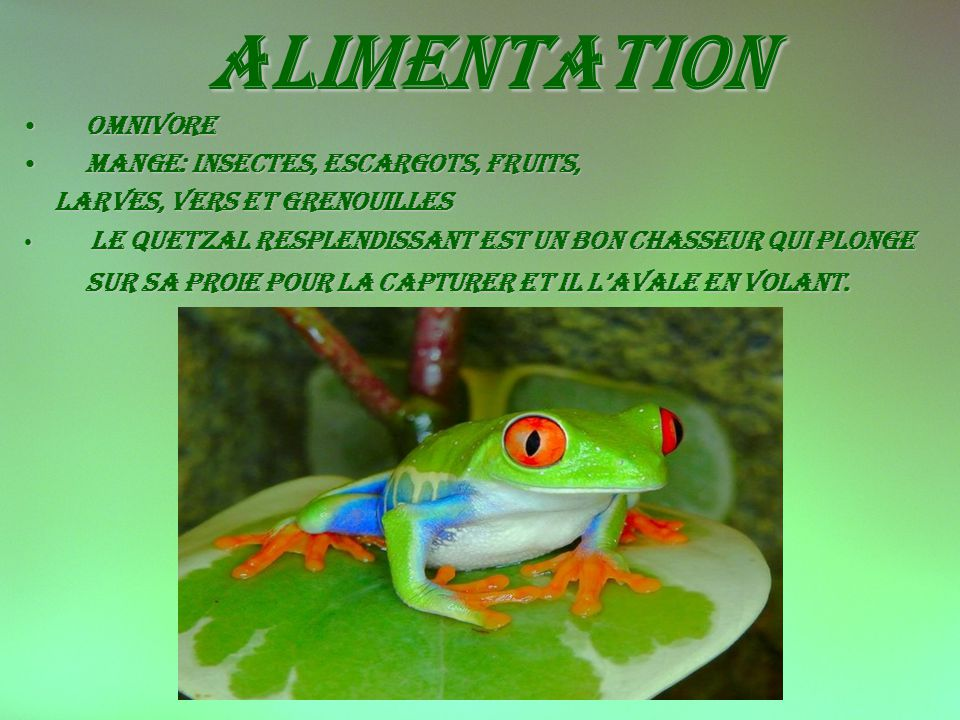 alimentation Omnivore Mange: insectes, escargots, fruits,