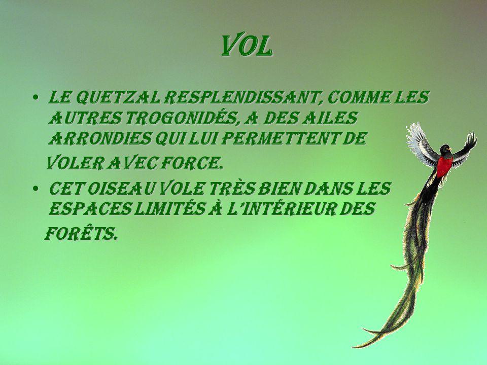 Vol Le Quetzal resplendissant, comme les autres Trogonidés, a des ailes arrondies qui lui permettent de.