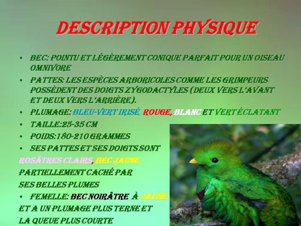 Description physique Bec: Pointu et légèrement conique parfait pour un oiseau omnivore.