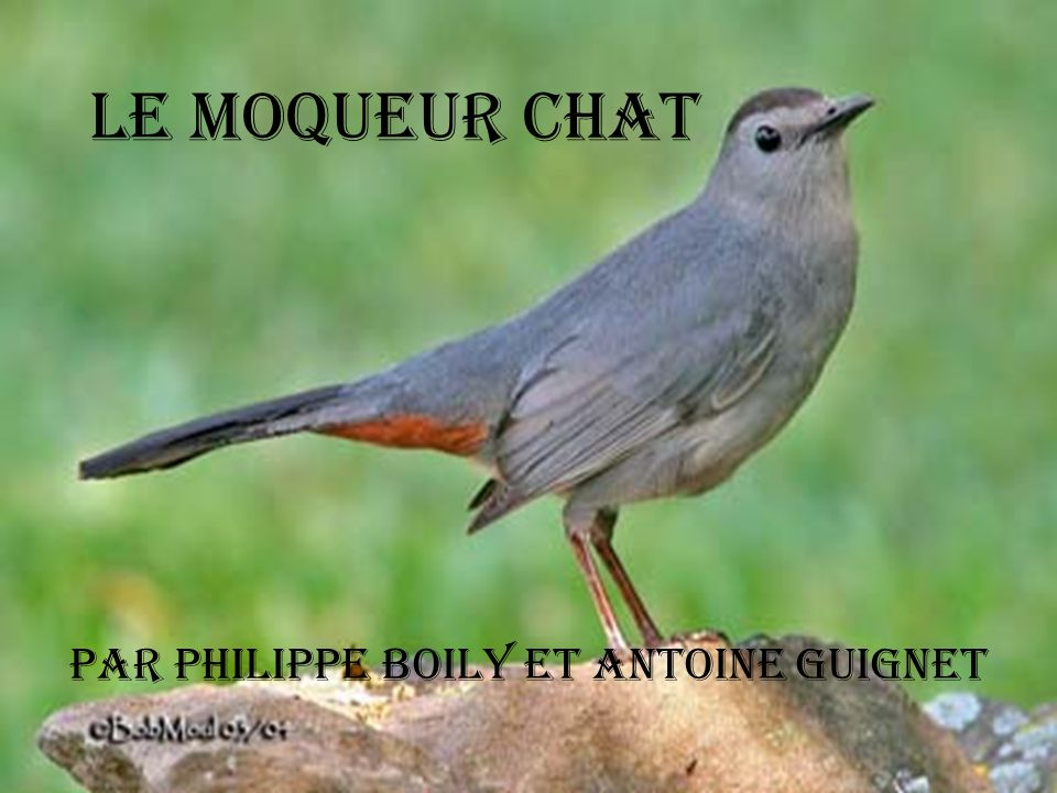 Par Philippe Boily et Antoine Guignet