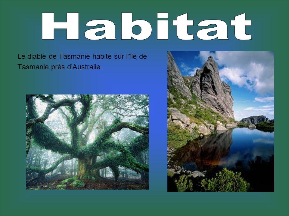 Habitat Le diable de Tasmanie habite sur l'île de