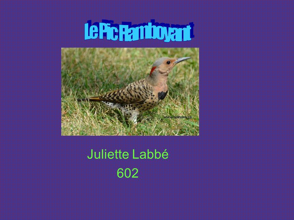 Le Pic Flamboyant Juliette Labbé 602