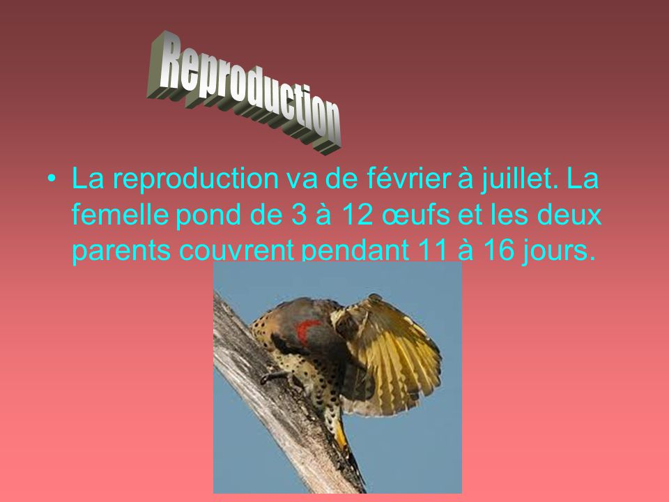 Reproduction La reproduction va de février à juillet.