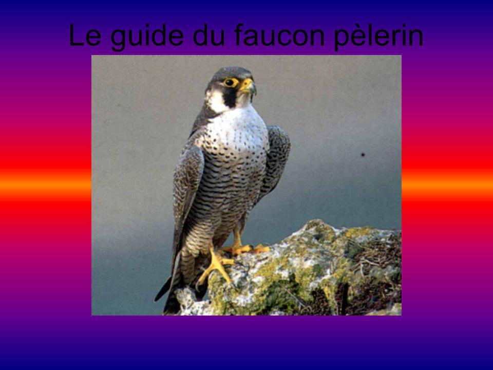 Le guide du faucon pèlerin