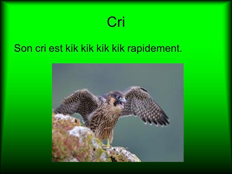 Cri Son cri est kik kik kik kik rapidement.
