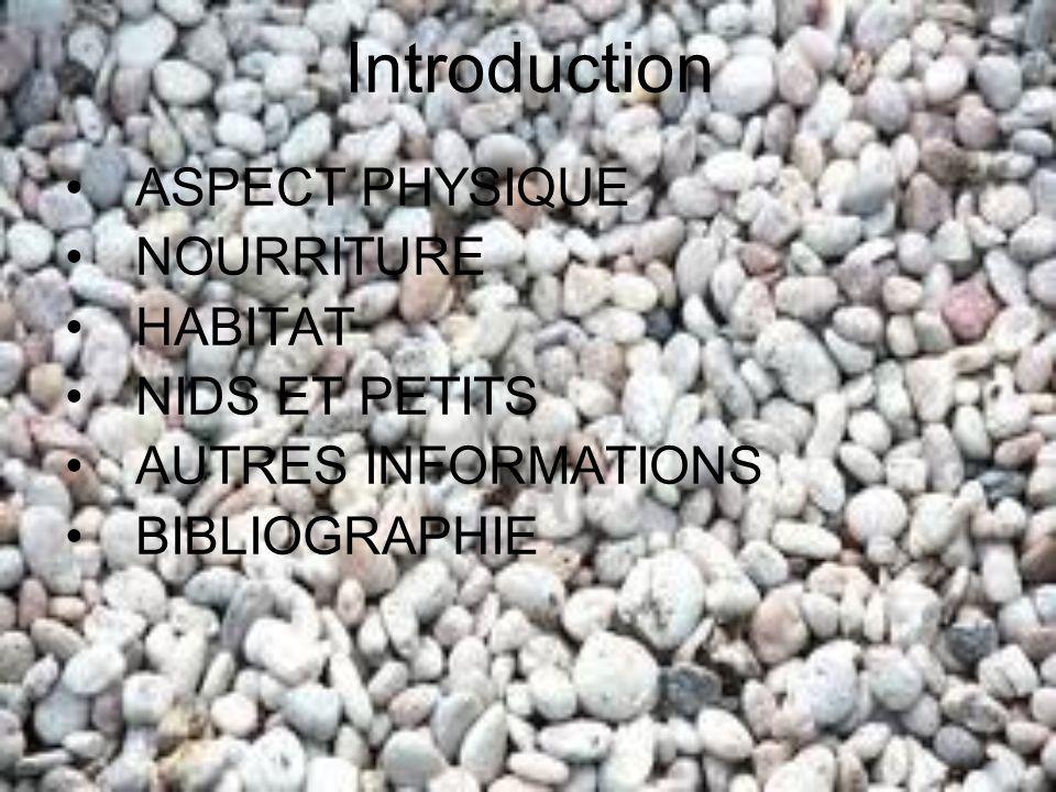 Introduction ASPECT PHYSIQUE NOURRITURE HABITAT NIDS ET PETITS