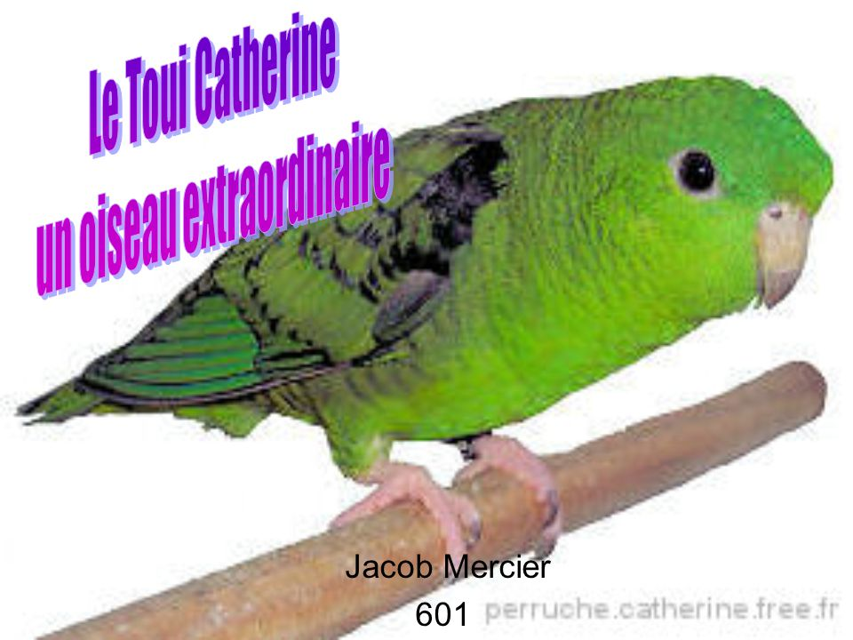 un oiseau extraordinaire
