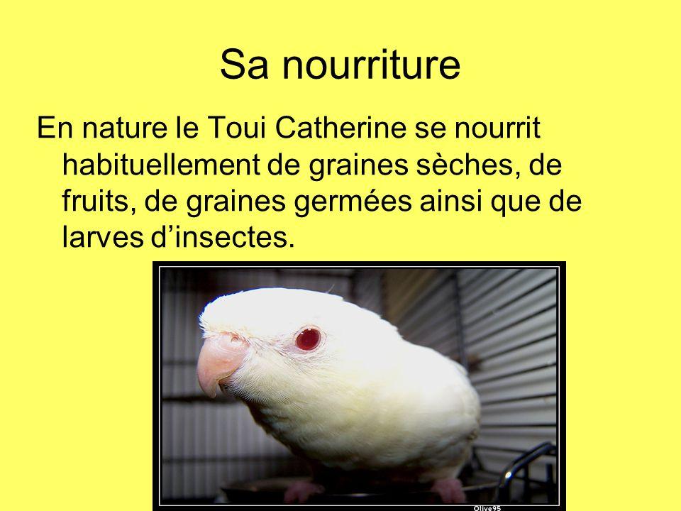 Sa nourriture En nature le Toui Catherine se nourrit habituellement de graines sèches, de fruits, de graines germées ainsi que de larves d'insectes.