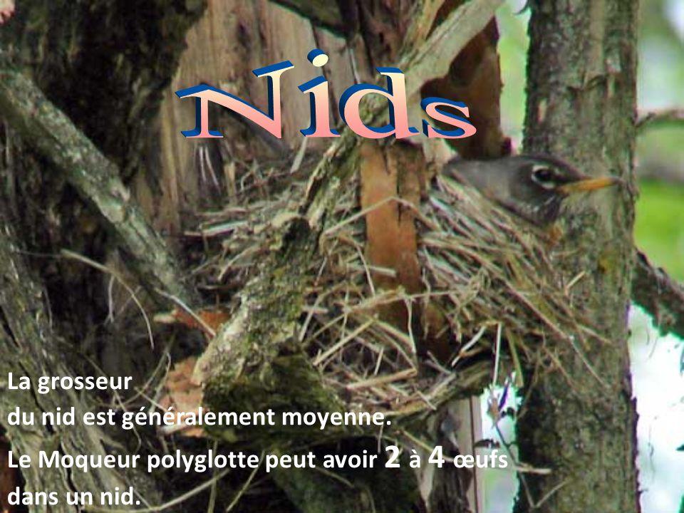 Nids La grosseur du nid est généralement moyenne.