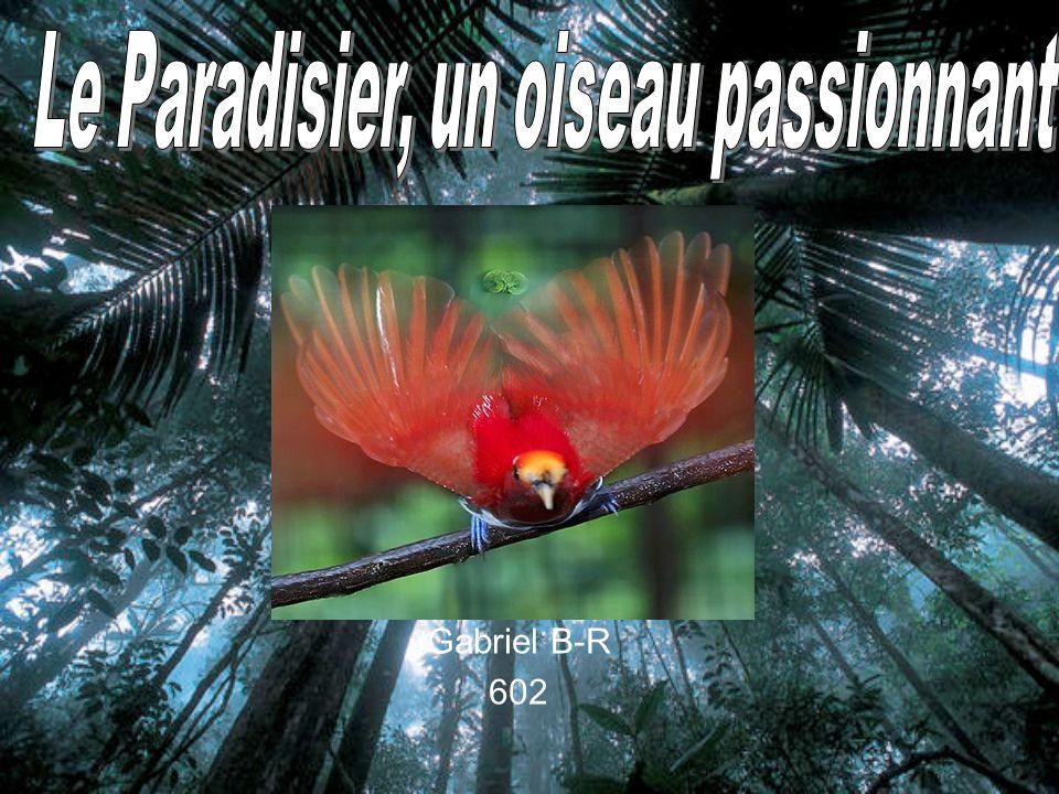 Le Paradisier, un oiseau passionnant